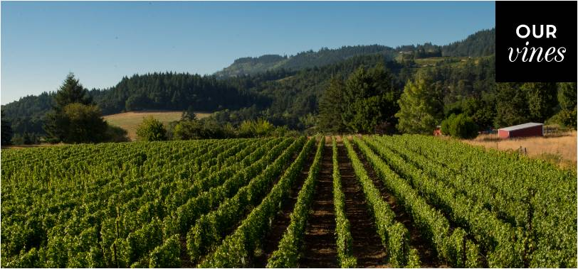 Our Wines   Formaglini Vineyards